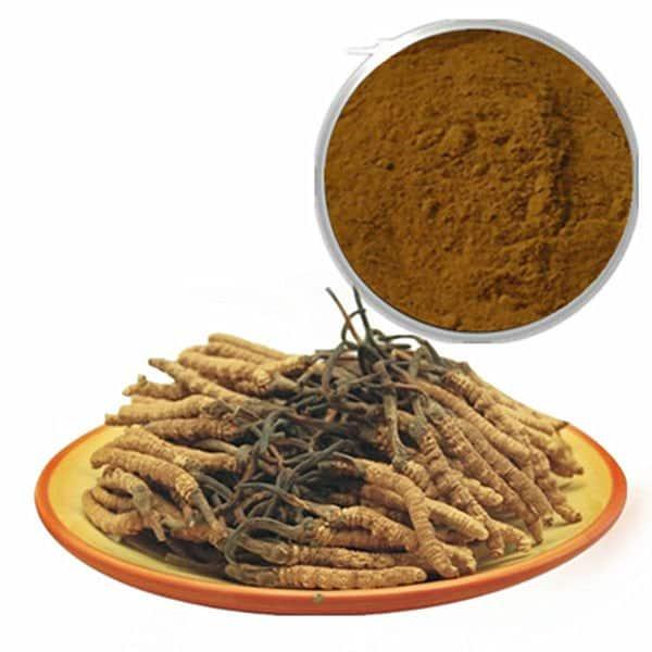 100_Natural_Yarsagumba_Extract_80_polysaccharide