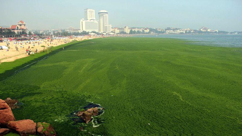CHINA-ENVIRONMENT-OCEANOGRAPHY-ALGAE