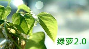 Baidu algorithm update: Baidu Money Plant