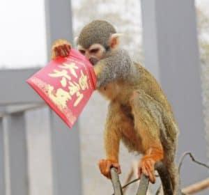 Hongbao Monkey