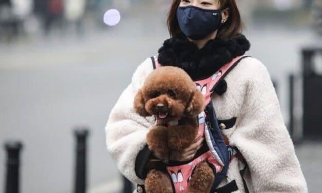 Chinese Pet health: a Multi Billion Dollars Market